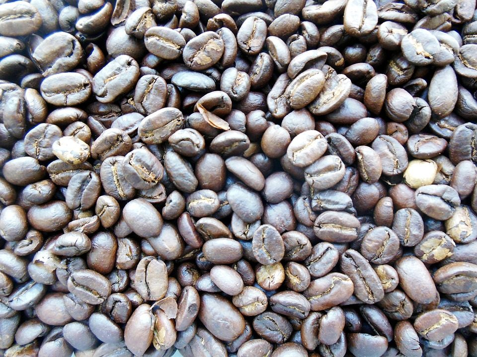 This image has an empty alt attribute; its file name is kopi-luwak-960x720.jpg